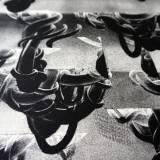 engraveringer, abstrakte, figurative, minimalistiske, monokrome, surrealistiske, natur, sorte, hvide, blæk, papir, abstrakte-former, samtidskunst, københavn, dansk, dekorative, design, interiør, bolig-indretning, moderne, moderne-kunst, nordisk, skandinavisk, Køb original kunst og kunstplakater. Malerier, tegninger, limited edition kunsttryk & plakater af dygtige kunstnere.