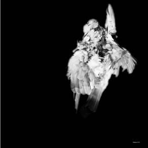sort hvid fugl æstetisk, stilrent, smukke, kunst fotografier til salg - online moderne kunst