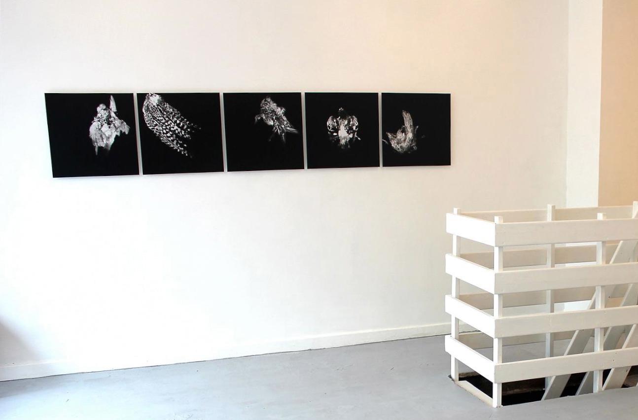 Galleri kunst - Udstilling af kunstfotografi sort hvid fotografi monteret på dibon plade